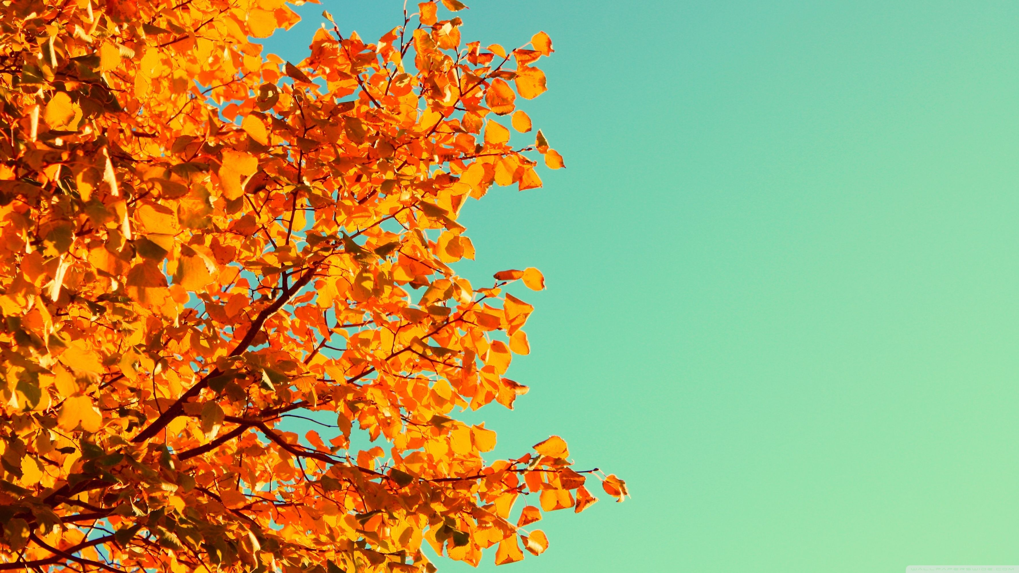 Fall Pc Wallpapers Posted By Michelle Thompson