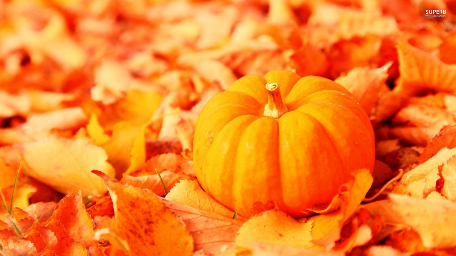 Fall Pumpkin Wallpaper and Screensavers 63 images