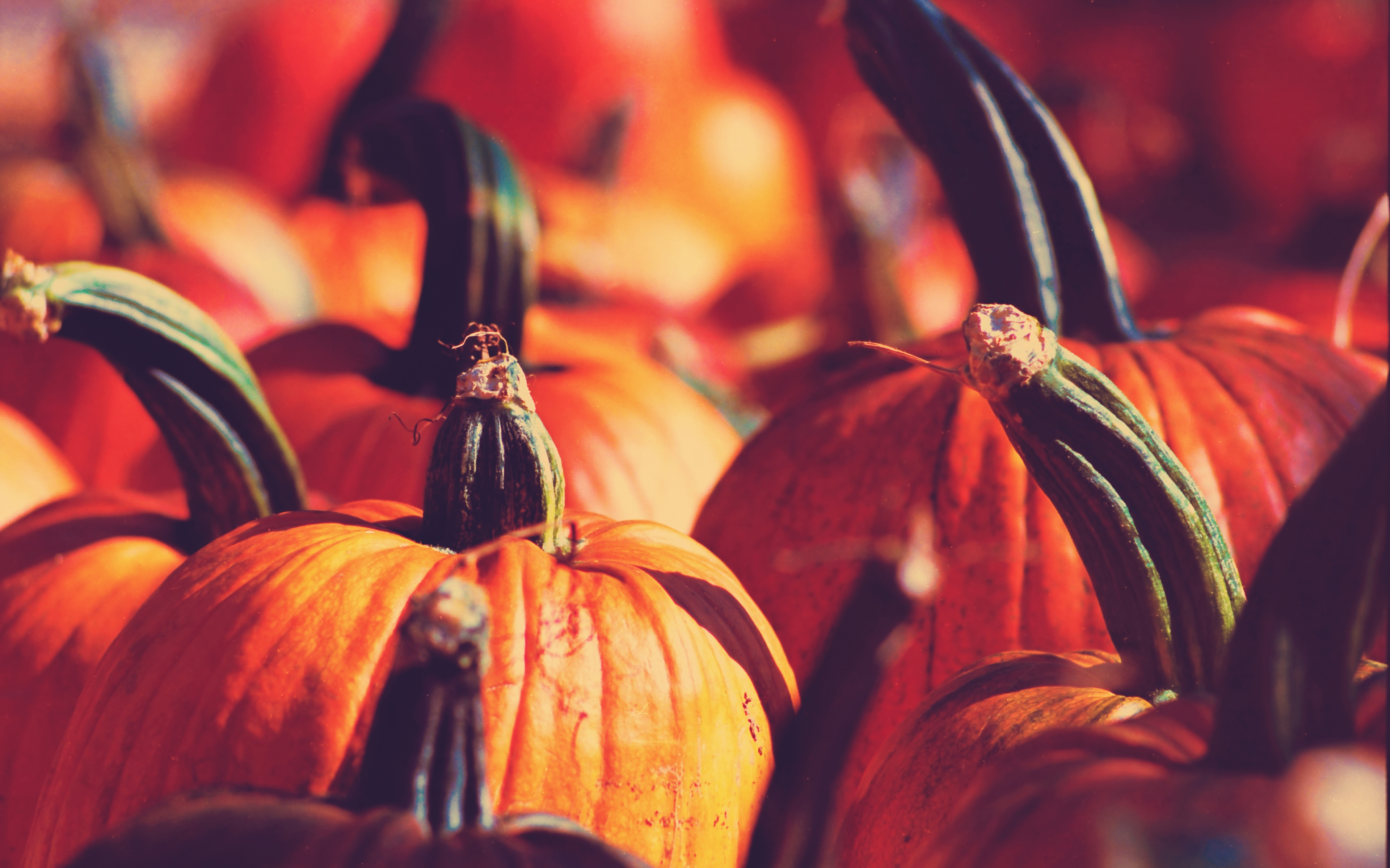 Fall Pumpkin Screensavers Posted By Ethan Simpson