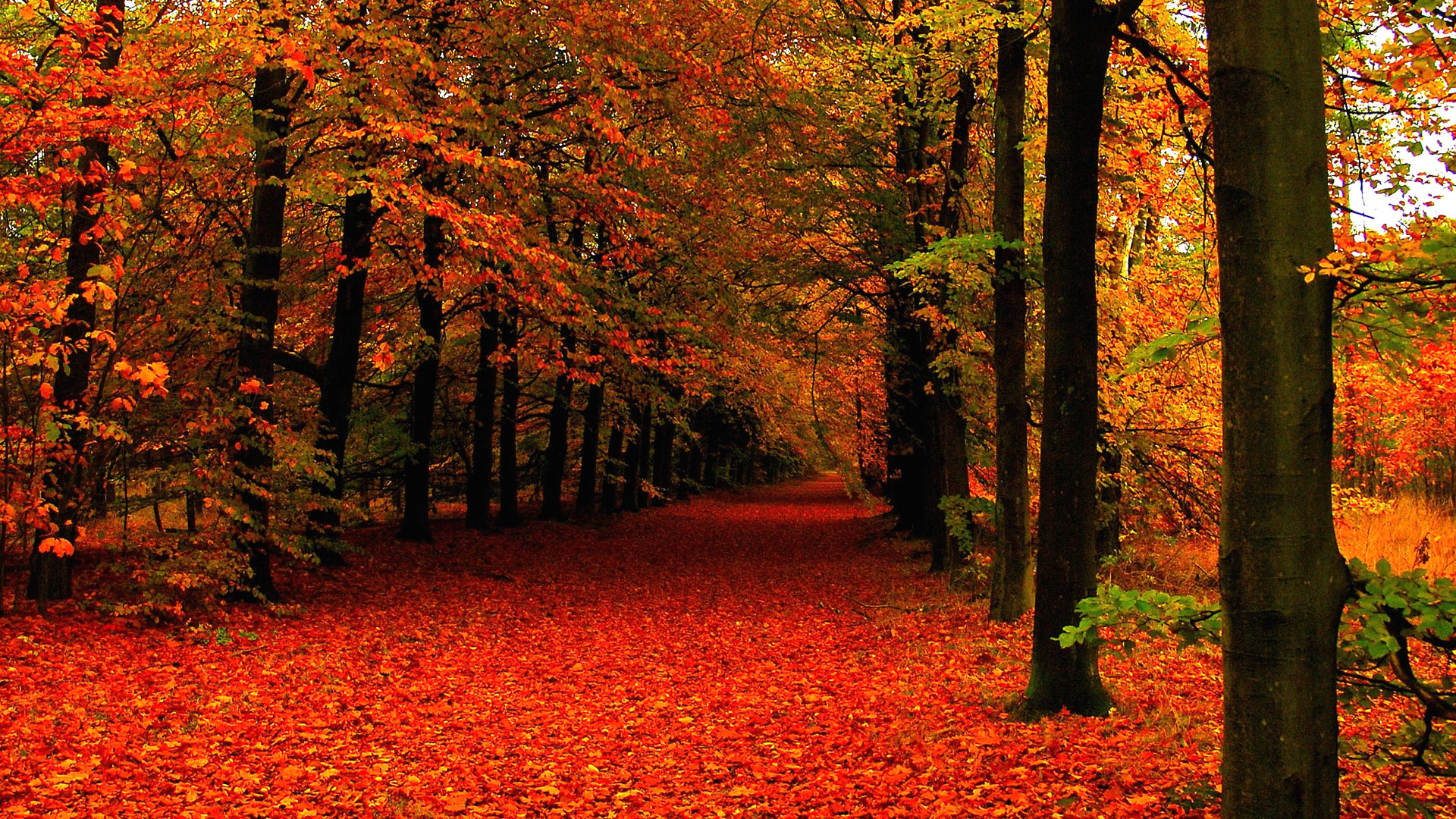 Screensavers And Wallpaper Autumn Scene