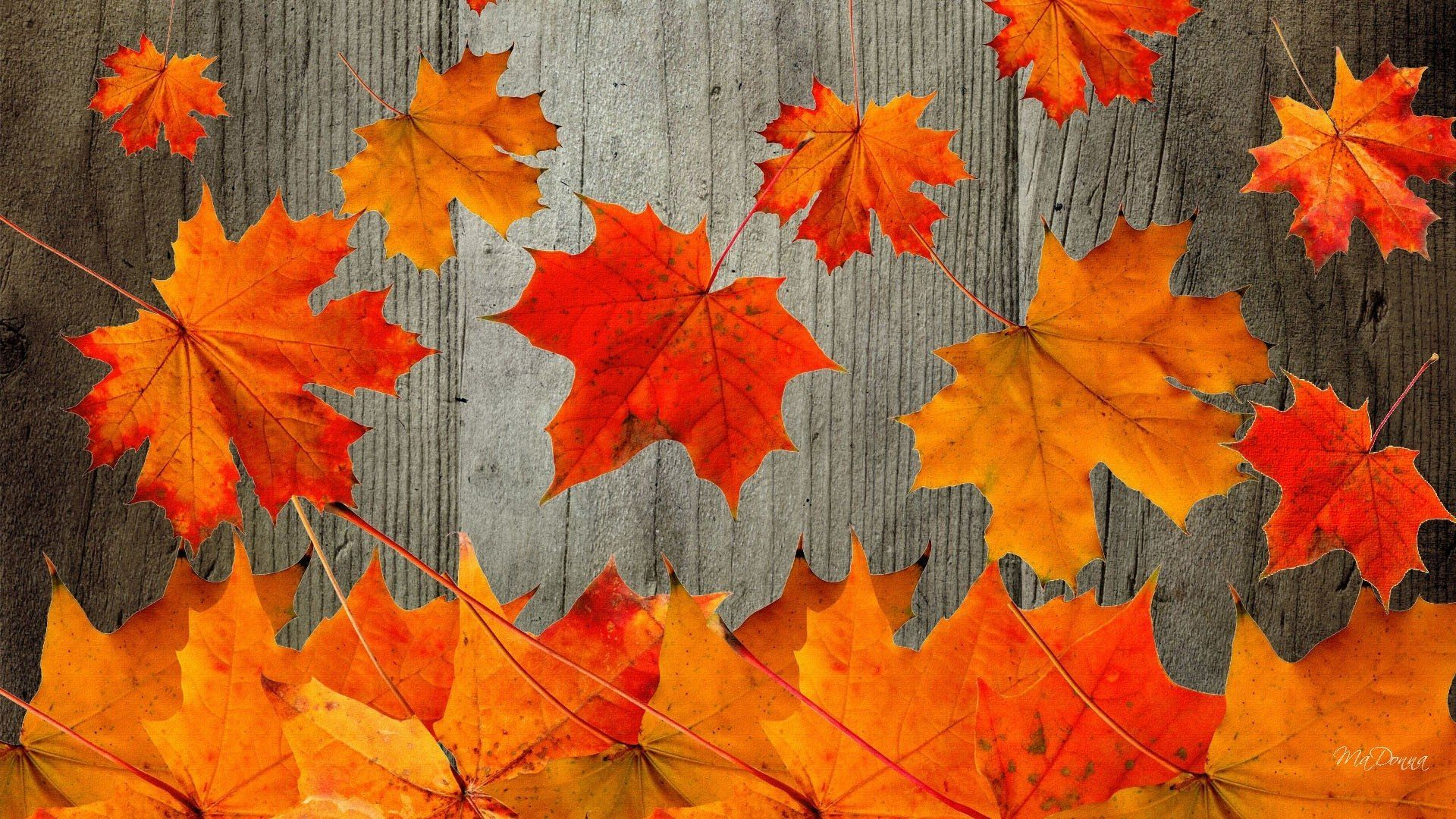 Fall Screensavers Free Desktop Posted By Ryan Johnson