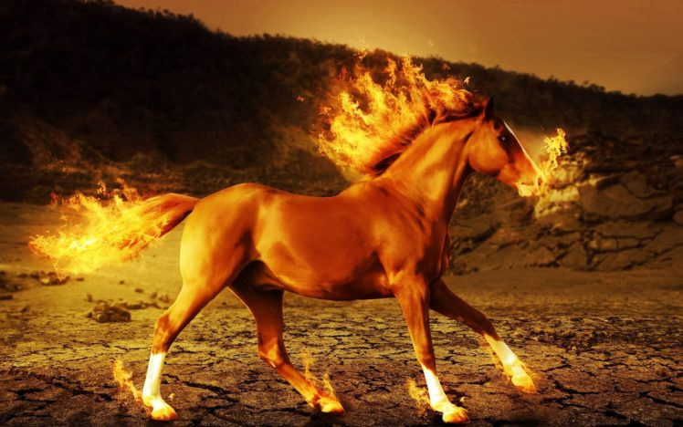 Fire Horse Wallpaper Hd Posted By Samantha Simpson