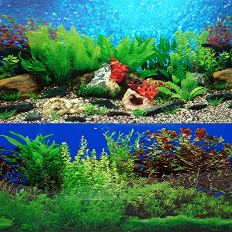 This is an image of Fish Tank Background Printable pertaining to betta