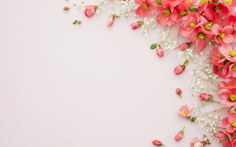 Flowers Background Hd لم يسبق له مثيل الصور Tier3 Xyz