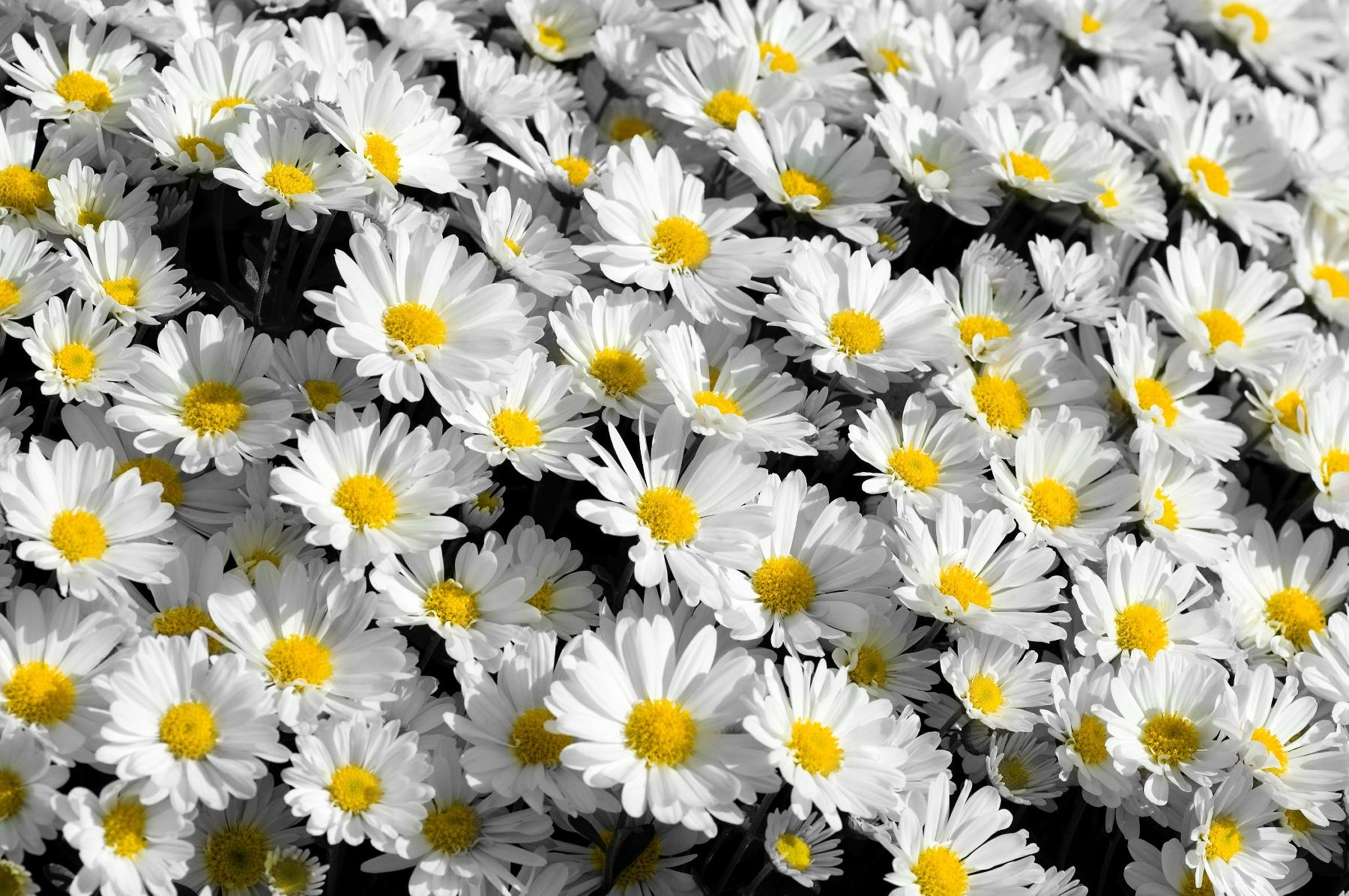 HD Widescreen, Tumblr Flower
