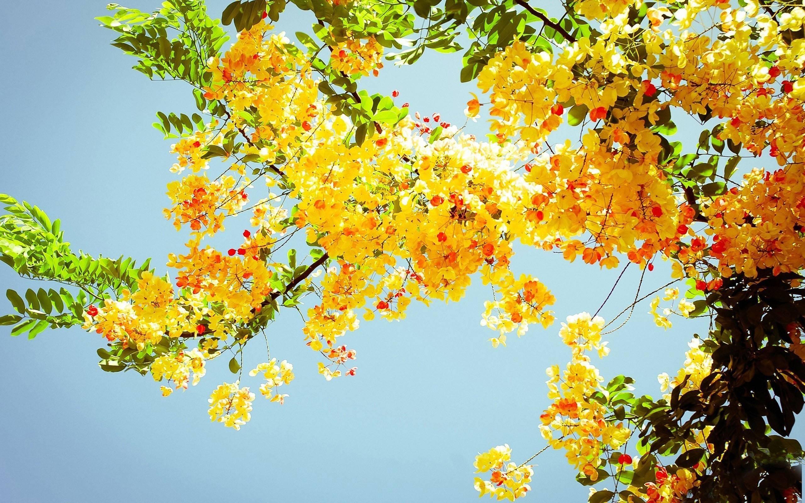 Summer flowers desktop background 9 Background Download