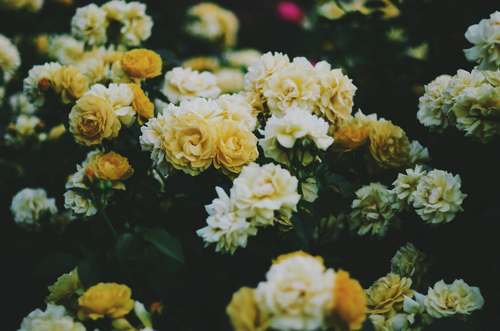 WIndows Backgrounds Yellow Desktop Background Tumblr