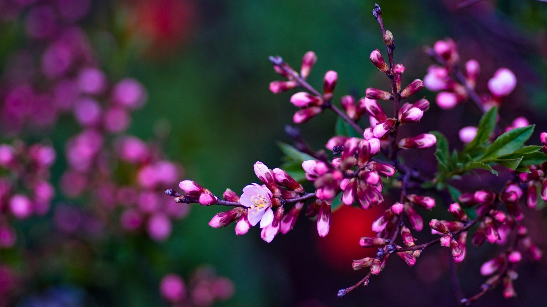 Wallpapers HD Flower Group 91+