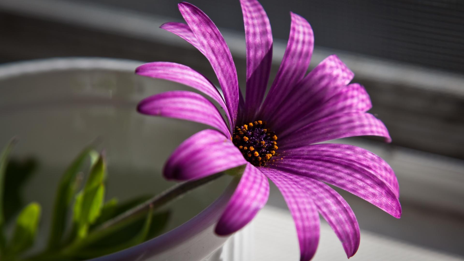 Flower Wallpaper 1920x1080 Posted By Ryan Mercado