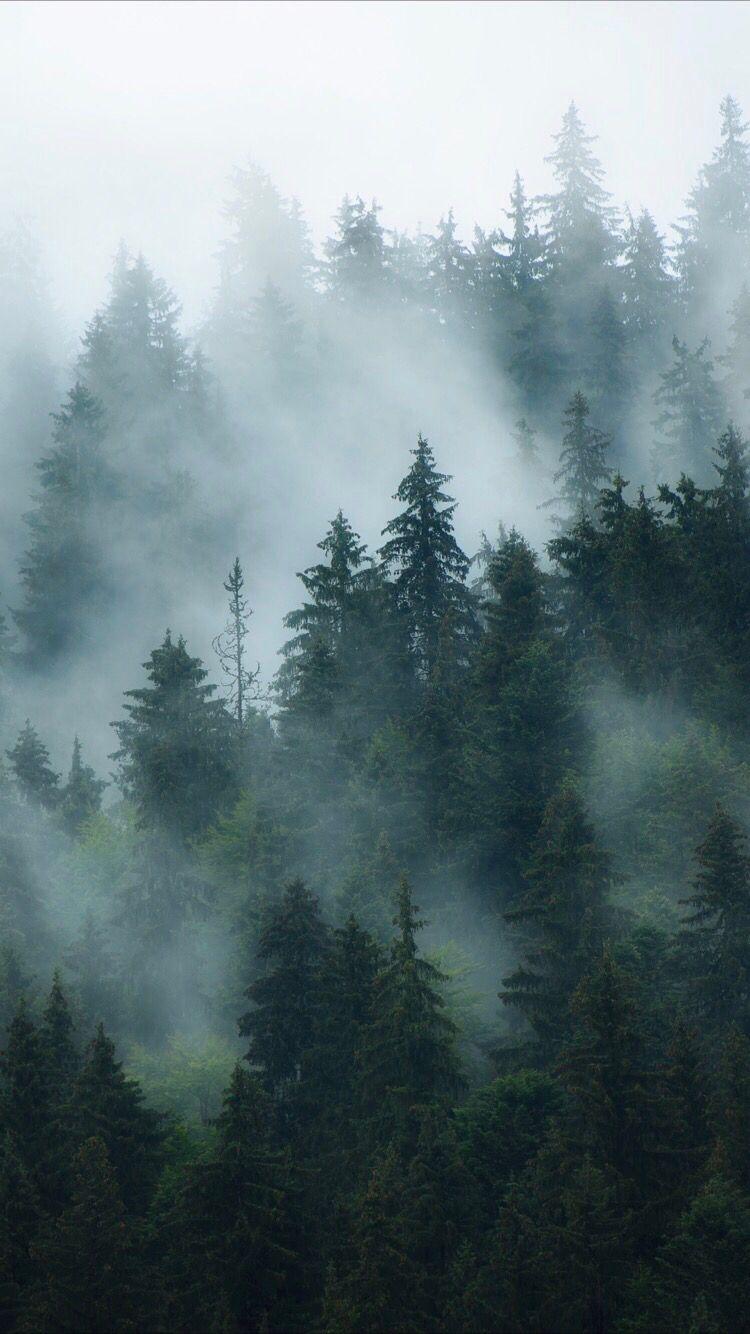 Forest Fog Wallpaper Posted By Ryan Peltier