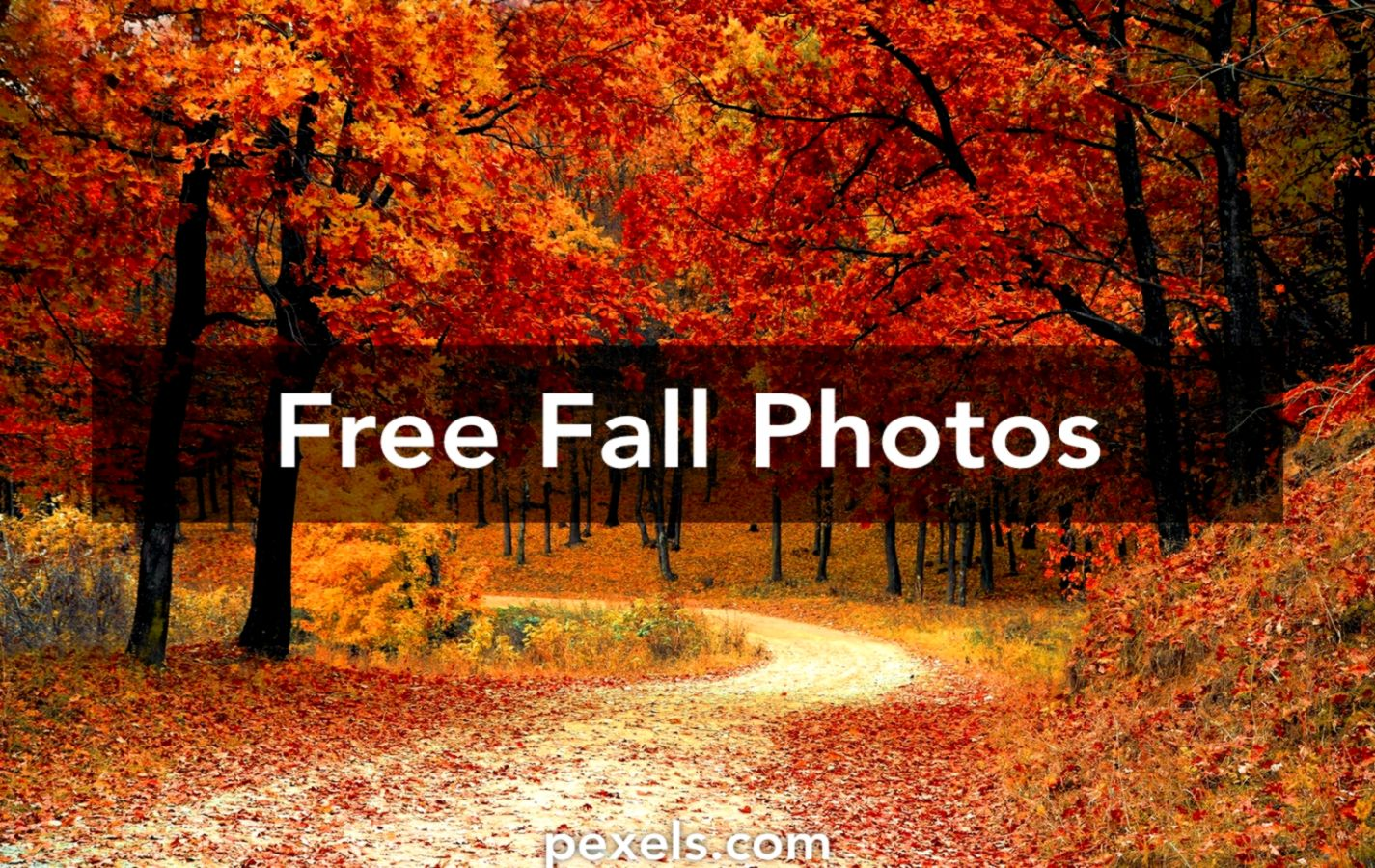 Free Fall Images For Desktop Posted By John Mercado