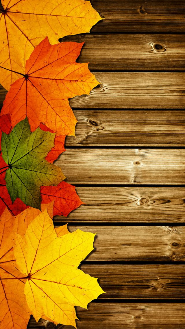 Free Fall Wallpapers For Android Posted By Christopher Thompson