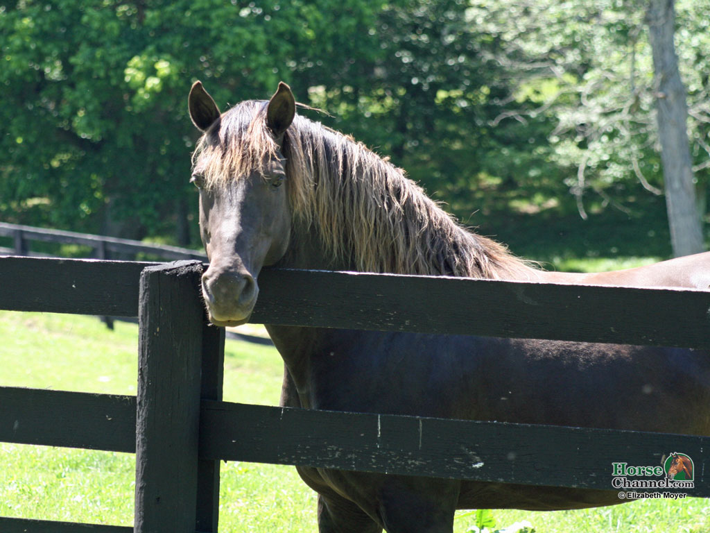 Free Horse Screensavers