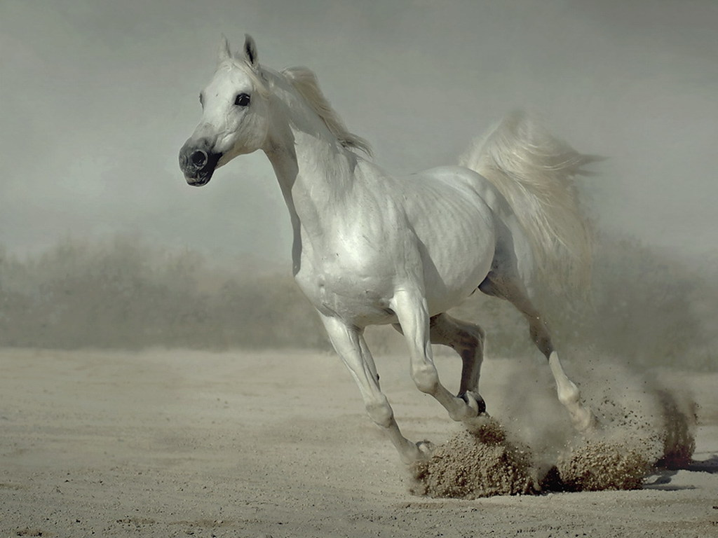 Free Horse Wallpapers Posted By Samantha Mercado