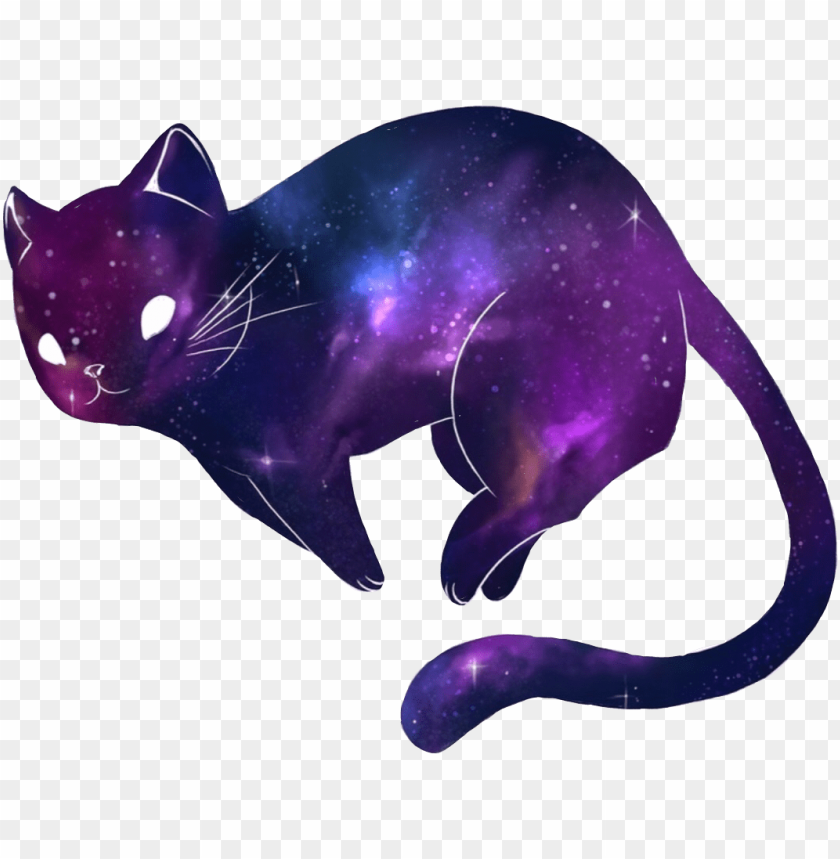 kitty cat galaxy galaxycat galaxykitty kitten cute PNG image