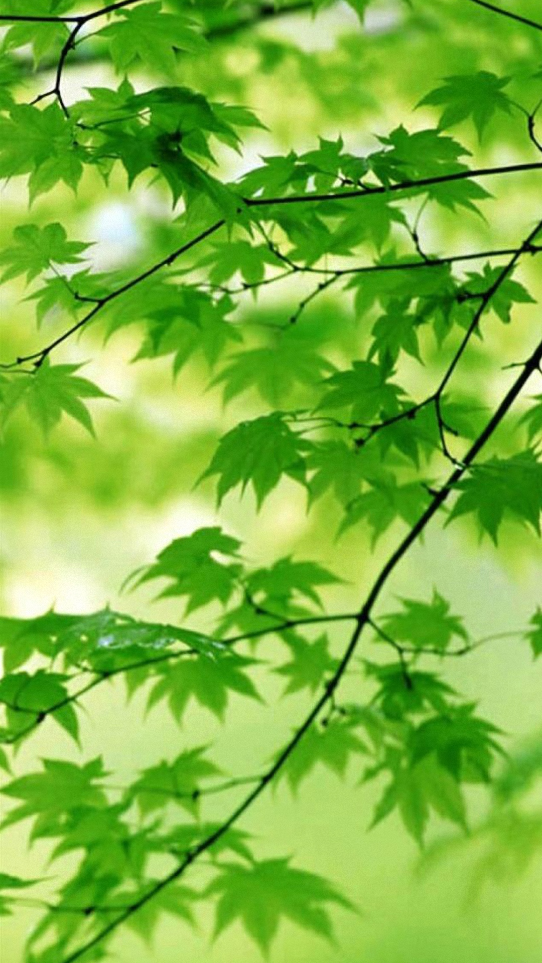 Cute Leaves samsung galaxy s4 s5 Wallpapers HD