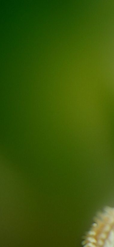 Green Wallpaper For Iphone Posted By Sarah Thompson