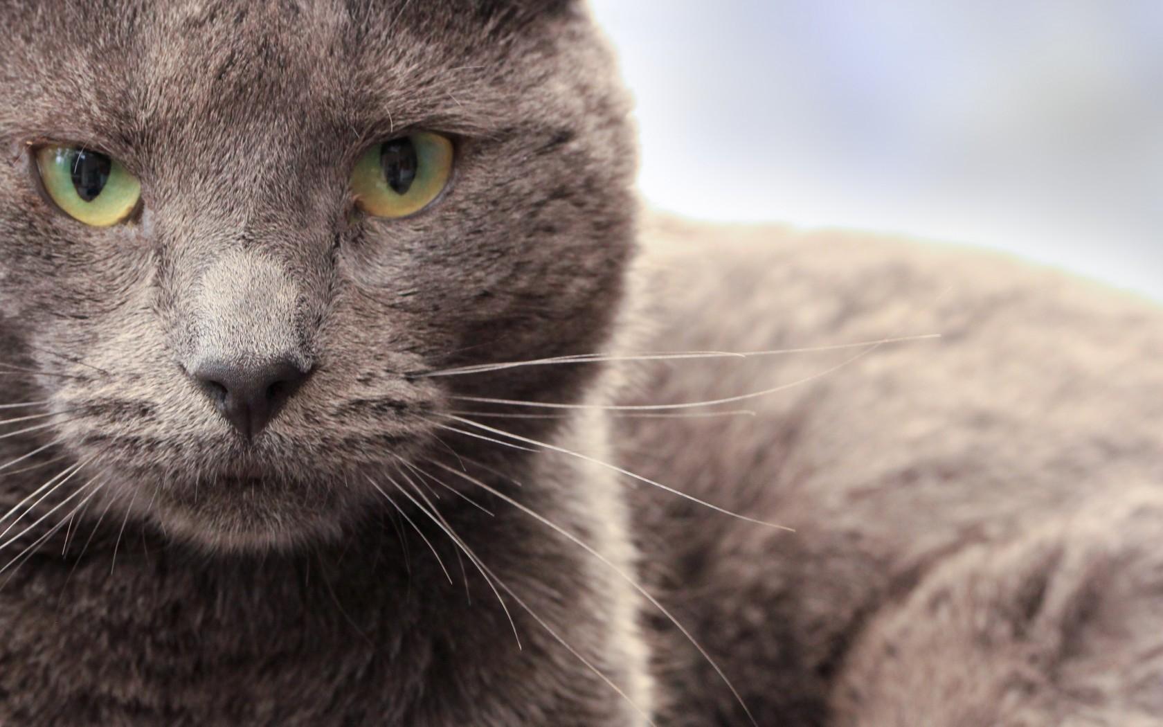 Grumpy Cat Screensaver Posted By Ryan Peltier
