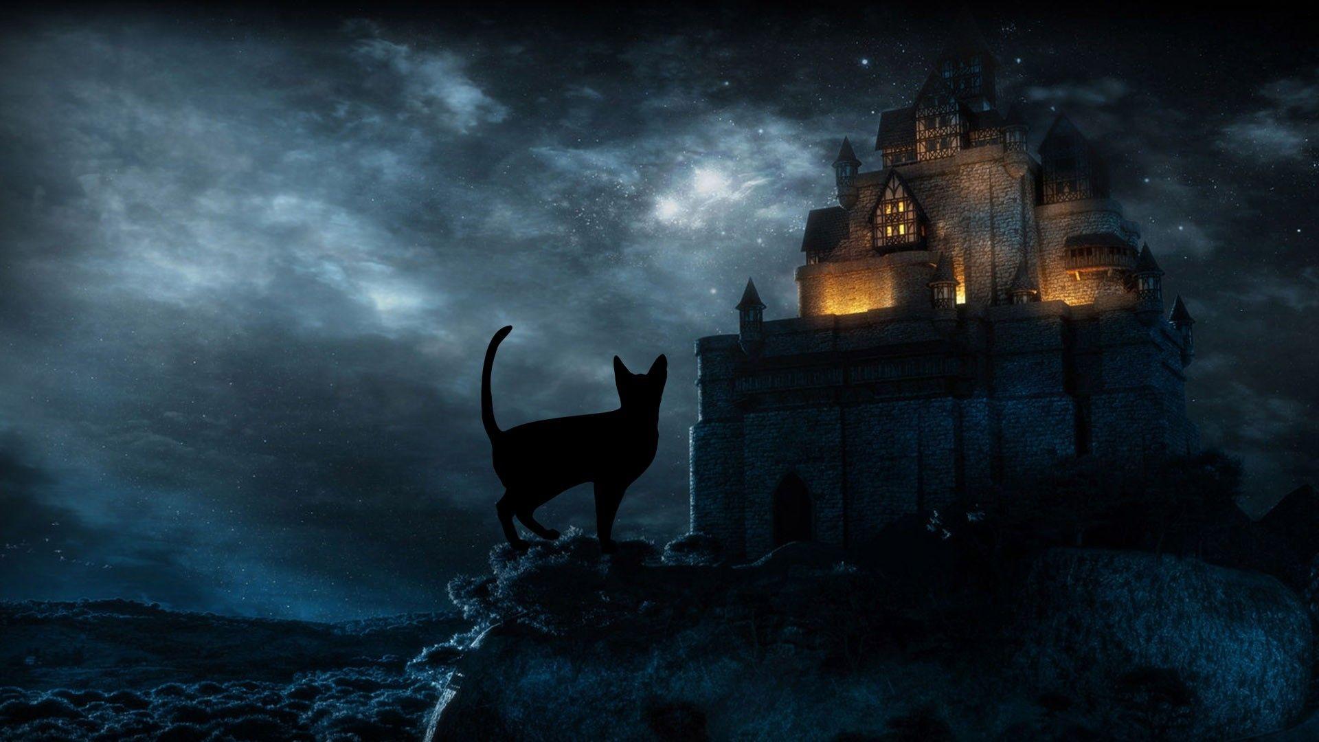 Black Cat Halloween Wallpapers Top Free Black Cat