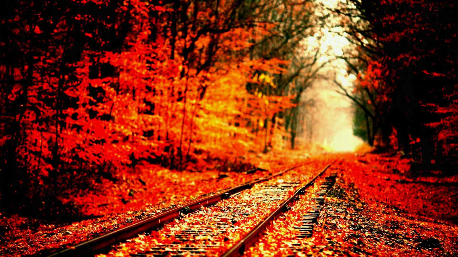 Halloween Fall Wallpaper Posted By John Simpson