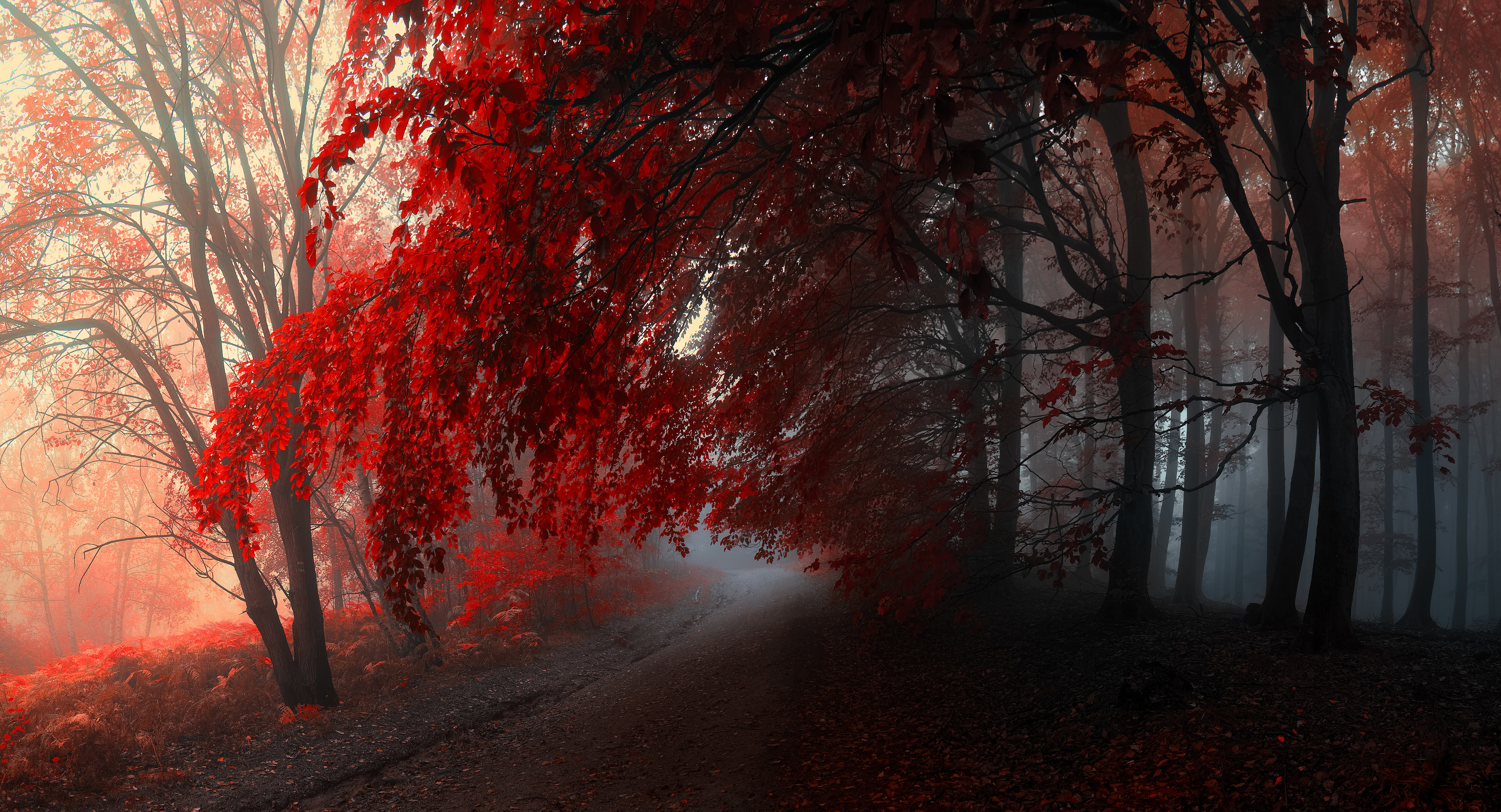 Hd Beautiful Forest Wallpaper Posted By Michelle Tremblay
