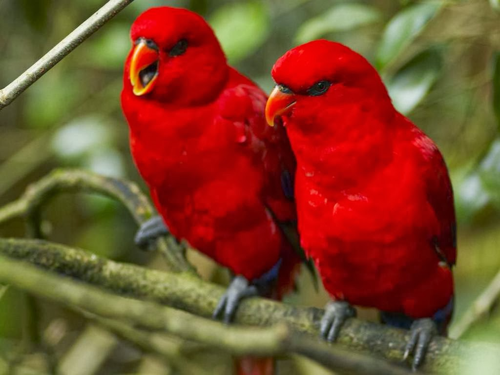 Hd Birds Wallpapers Posted By Christopher Anderson