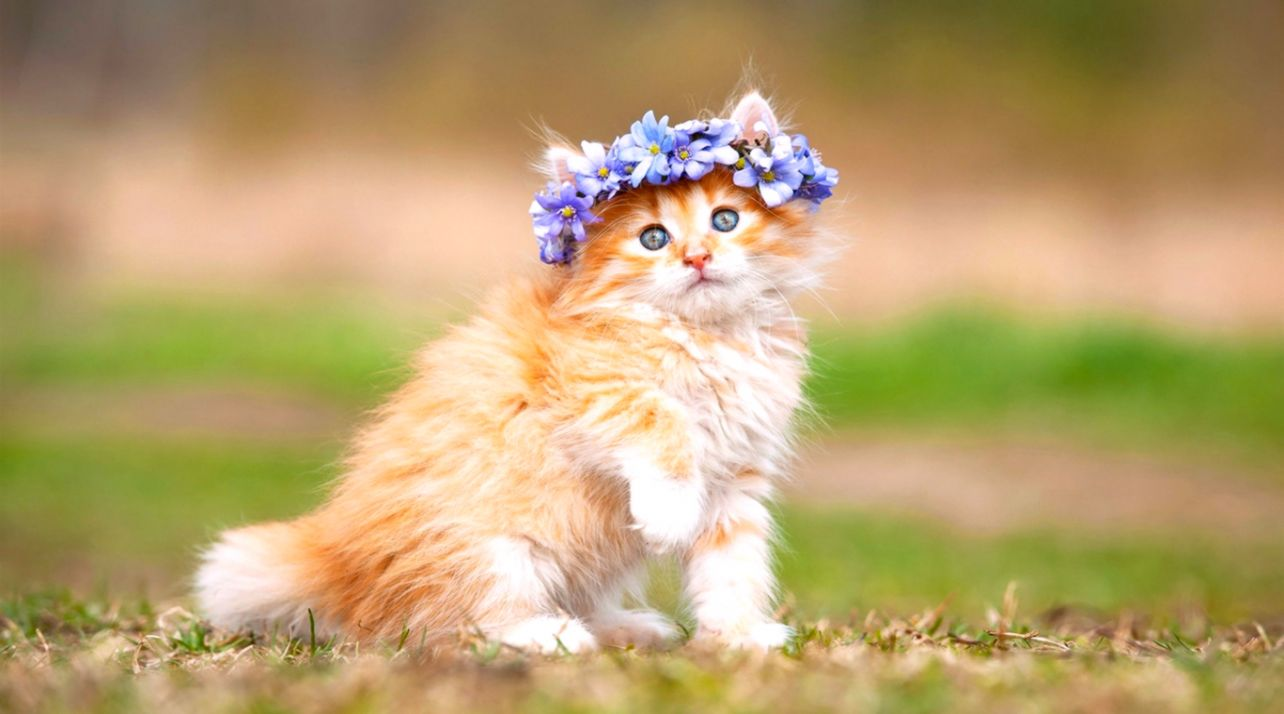Hd Cats Wallpapers Posted By Christopher Anderson