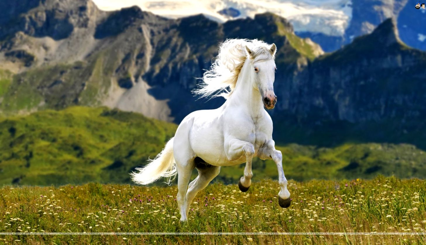 Hd Horse Wallpapers Posted By Michelle Anderson
