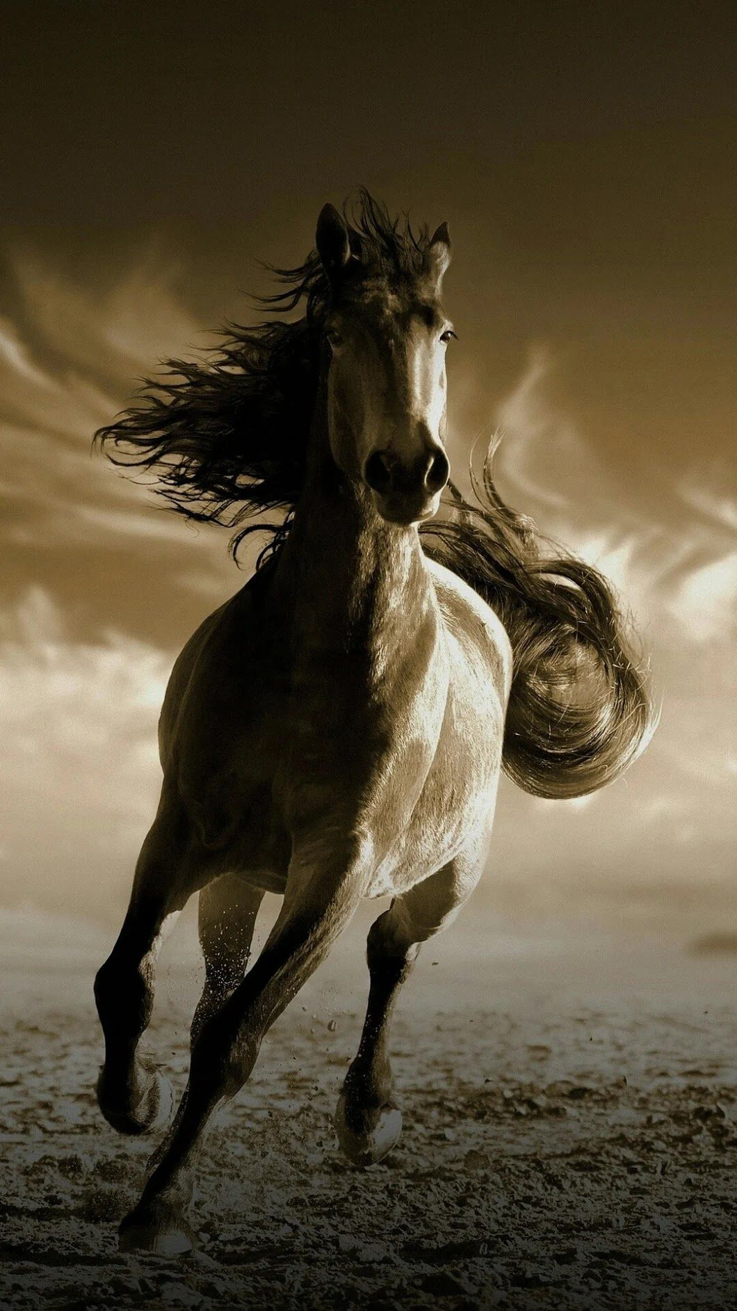Hd Horses Wallpapers Posted By Michelle Johnson