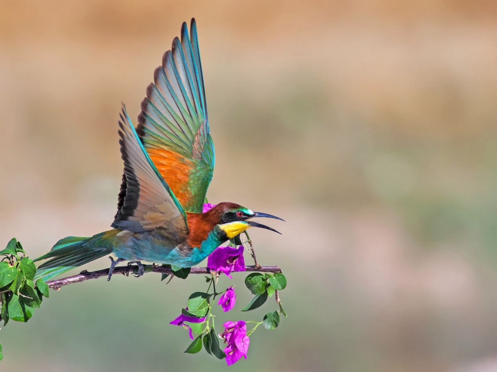 High Definition Birds Wallpapers Posted By Ryan Sellers