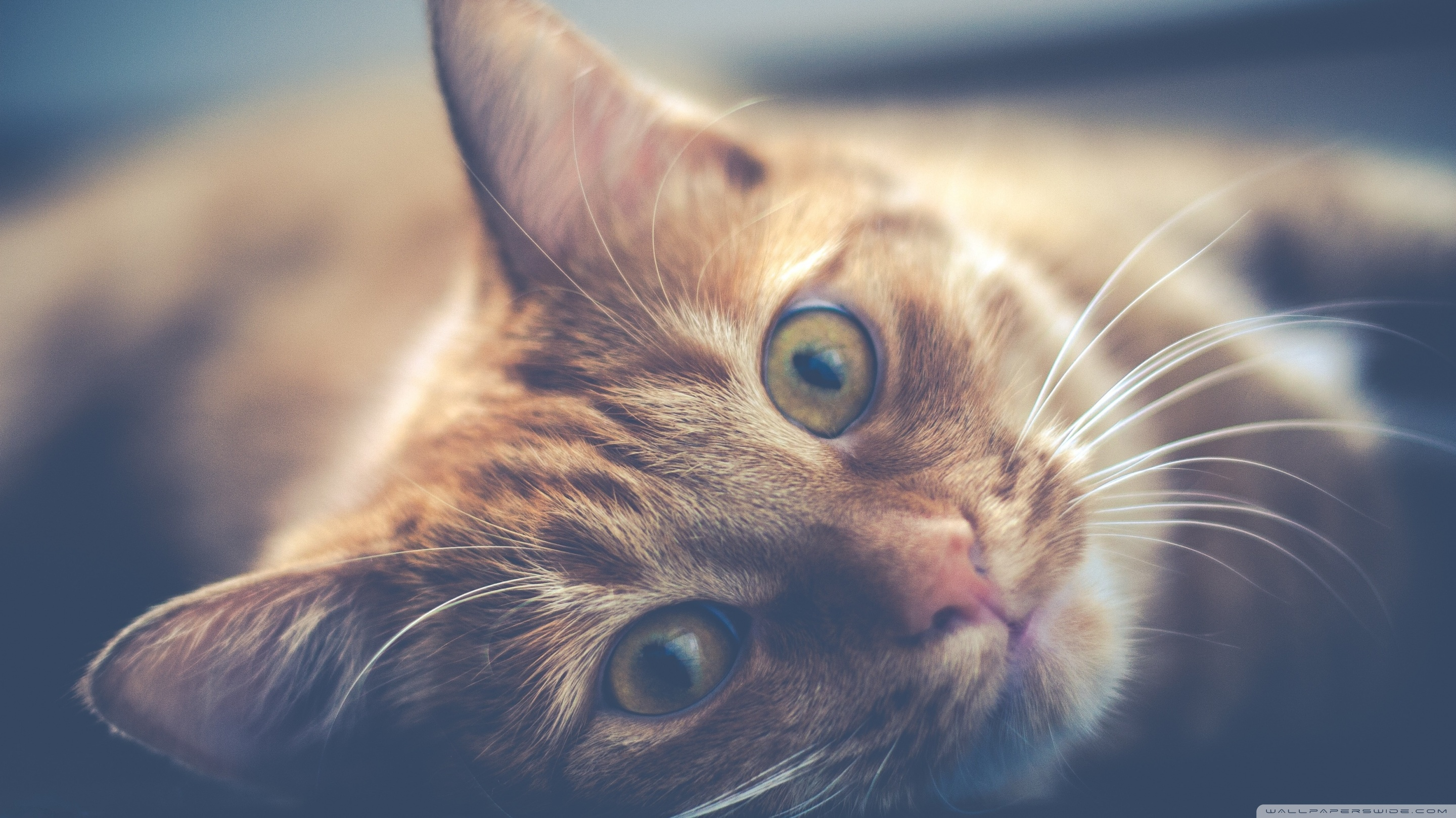 High Definition Cat Wallpaper Posted By Christopher Johnson