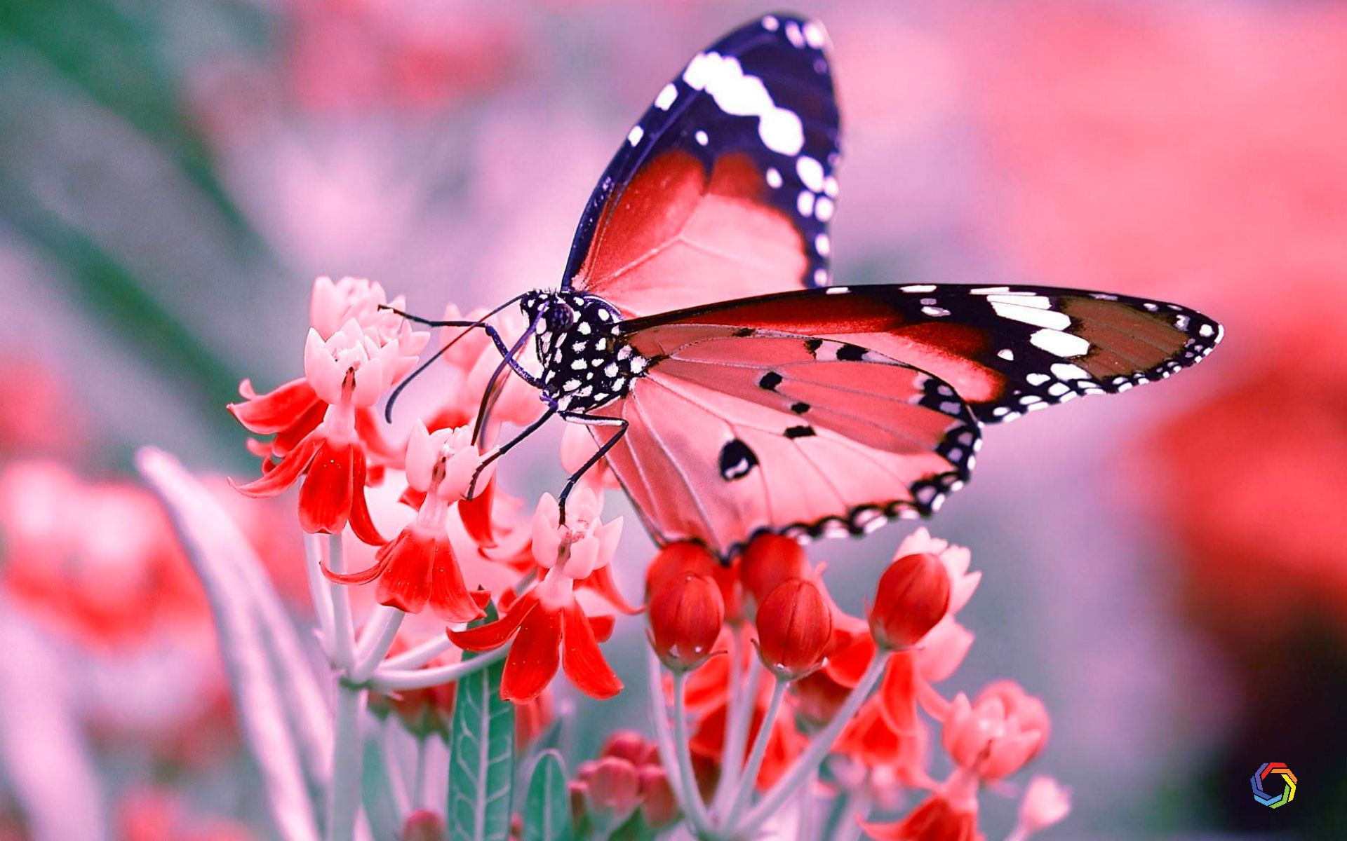 High Quality Butterfly Wallpaper Posted By Michelle Simpson