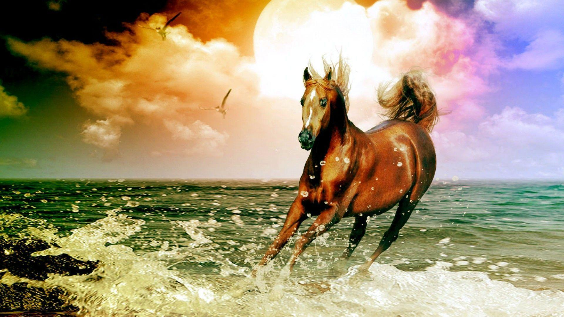 Horse Background Wallpaper Posted By Ethan Johnson