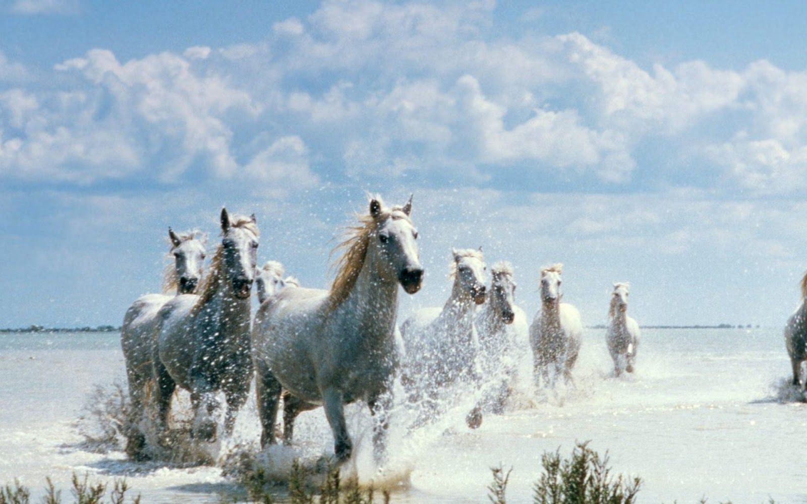 Horse Hd Wallpapers 1080p Posted By Samantha Thompson