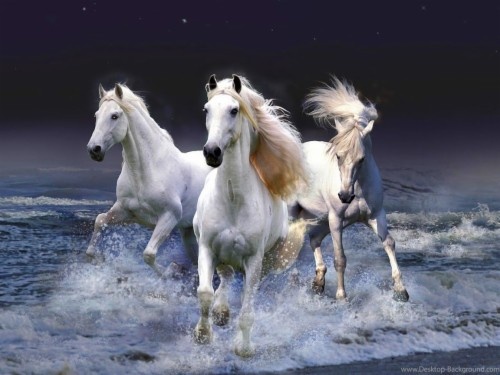 Horse Hd Wallpapers Posted By Zoey Simpson