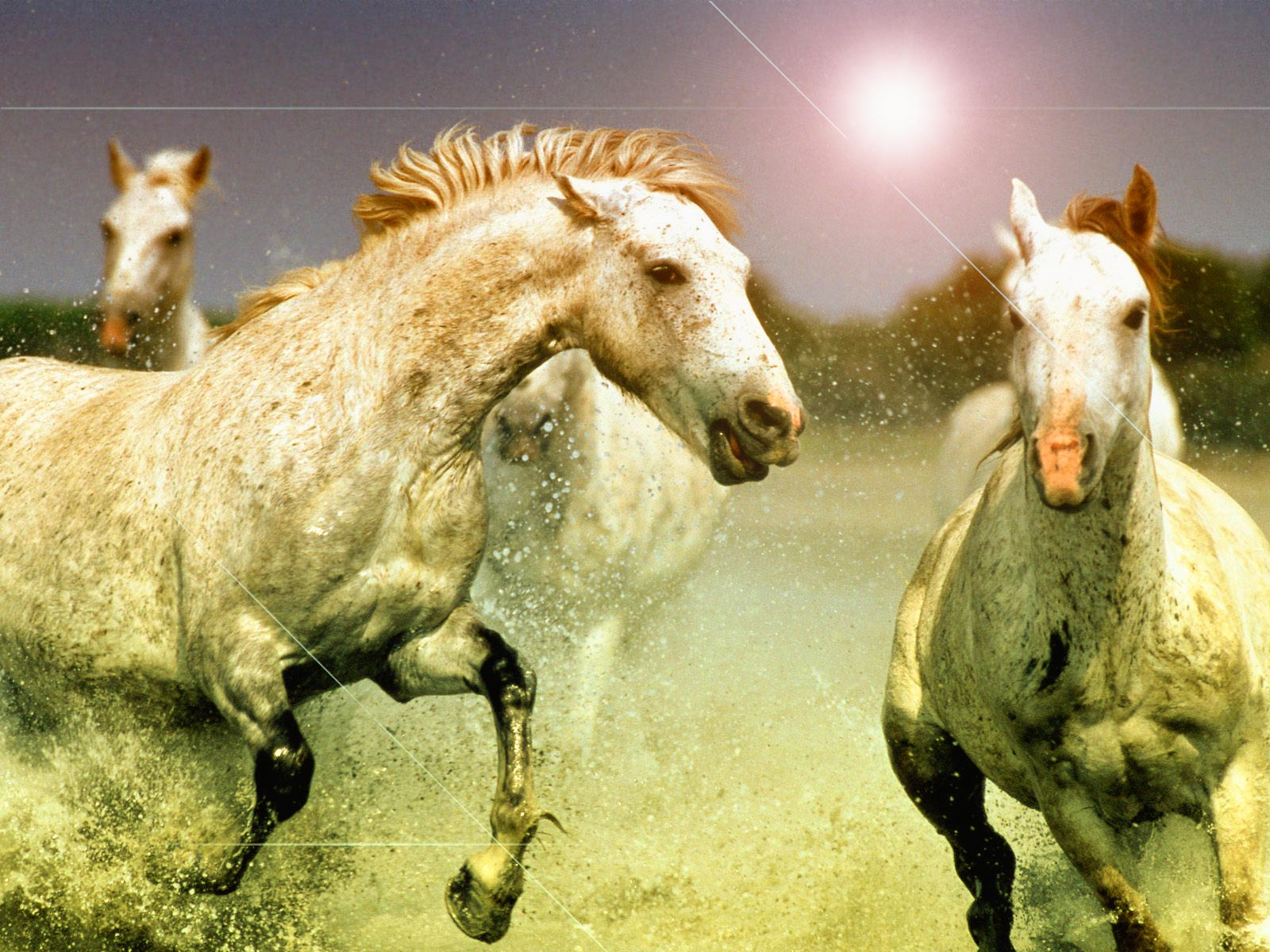 Horse Wallpaper For Phone Posted By Sarah Simpson