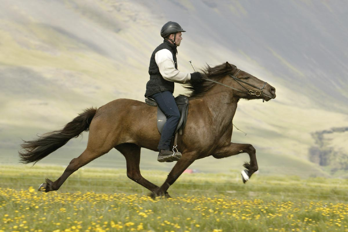 Horseback Riding Wallpaper Posted By John Johnson