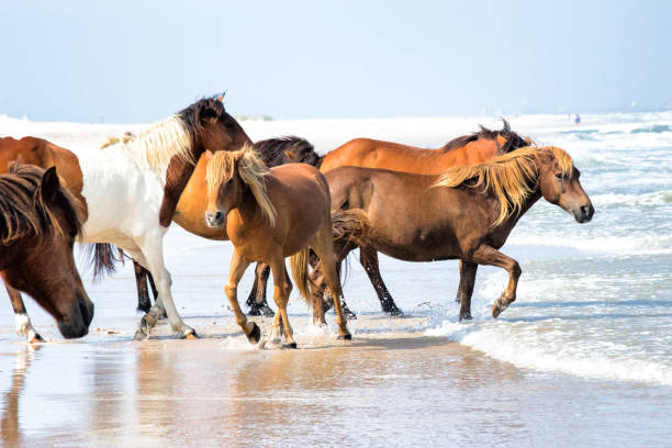 Horses Running On Beach Posted By Ethan