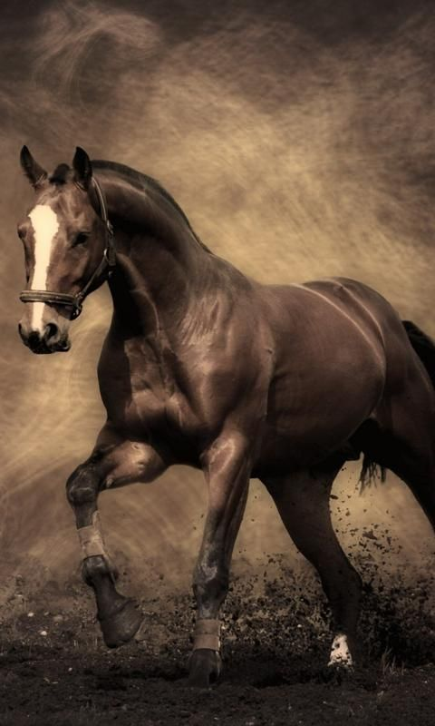 Horses Wallpaper Free Download Posted By Michelle Mercado