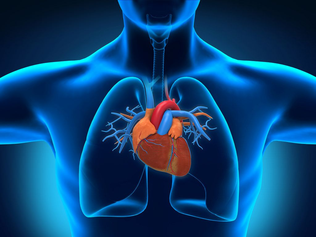 Human Heart Images Hd posted by Ethan ...