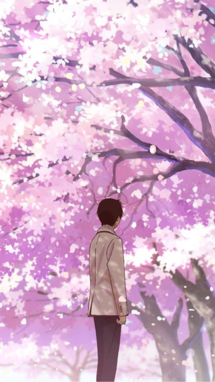 I Want To Eat Your Pancreas Wallpaper Posted By Samantha Thompson