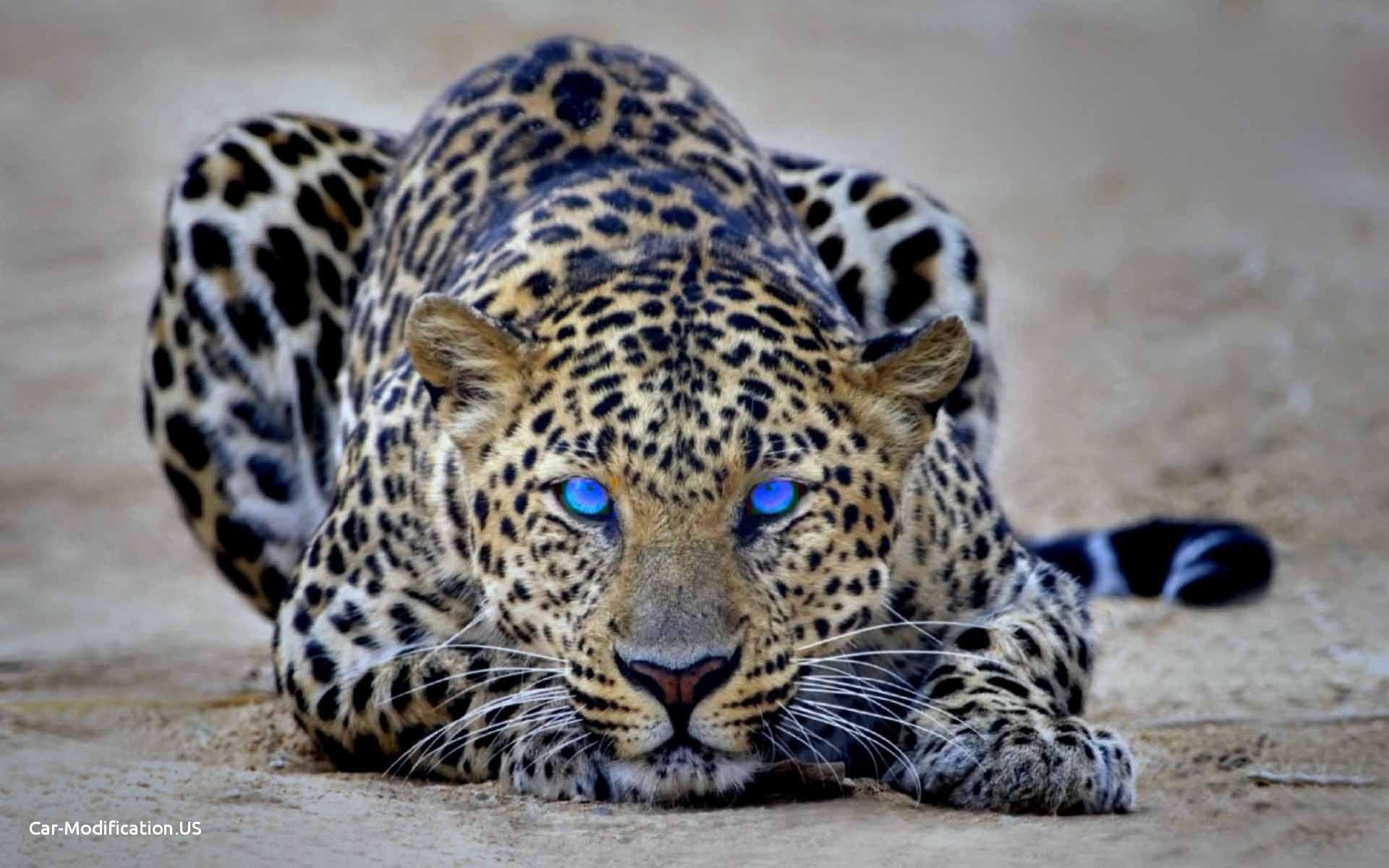 Jaguar Animal Wallpaper Posted By Ryan Mercado
