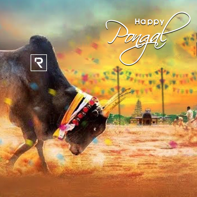 Jallikattu Hd Images Posted By Ethan Mercado Can't find what you are looking for? jallikattu hd images posted by ethan