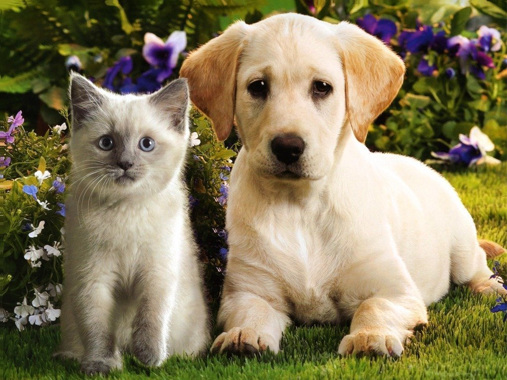Kitten And Puppies Wallpaper Posted By Ethan Sellers