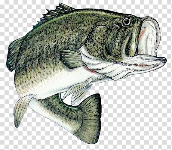 Largemouth Bass Backgrounds Posted By Samantha Johnson