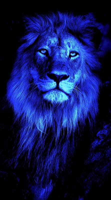 Lion Eyes Wallpapers Posted By Samantha Sellers