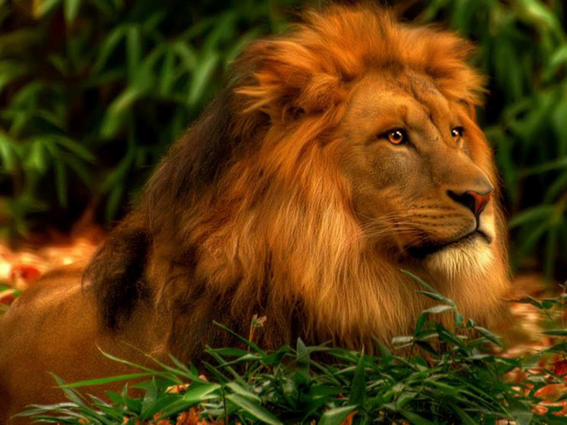 Lion Hd Wallpaper For Android Posted By Michelle Tremblay