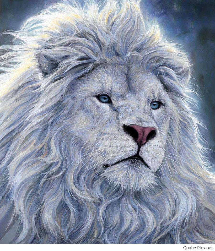 Lion Walpaper Posted By John Simpson