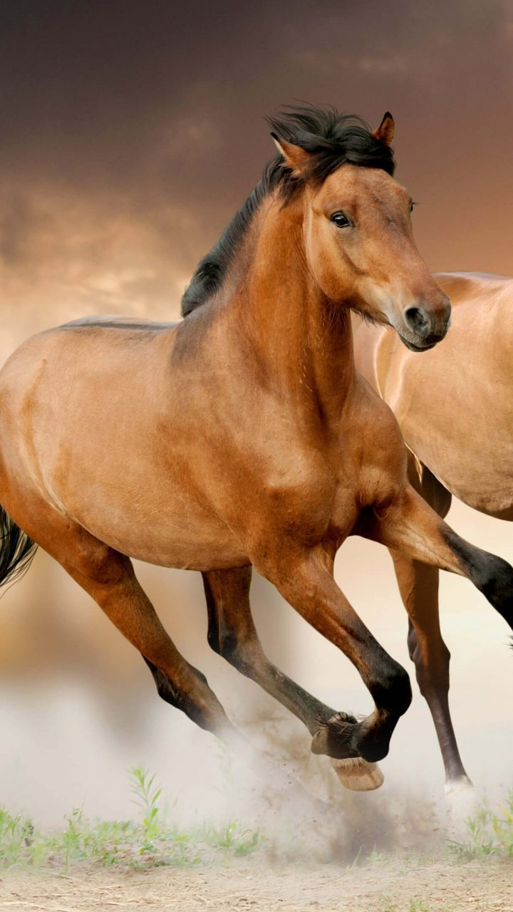 Live Horse Wallpaper Posted By Sarah Peltier