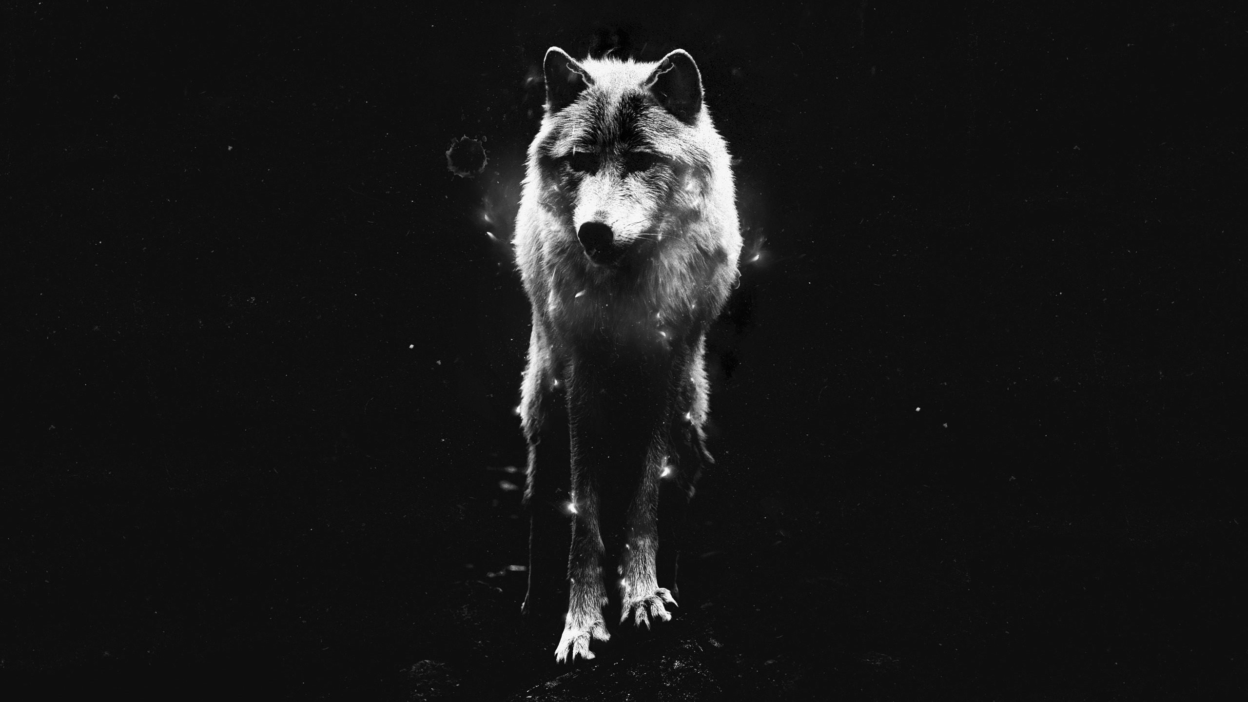 Lonewolf Game Wallpapers Posted By Zoey Cunningham
